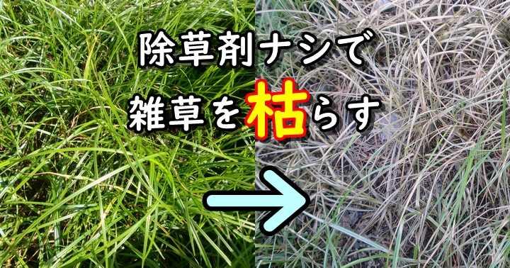 雑草 枯らす