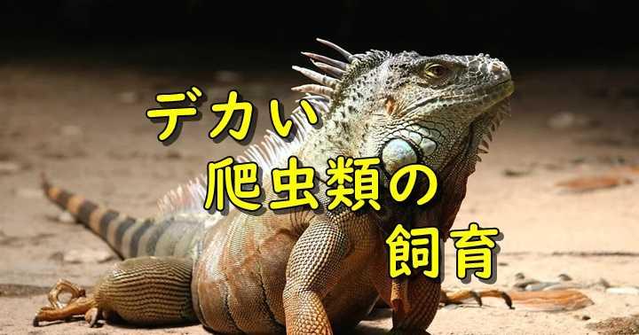 爬虫類の飼育