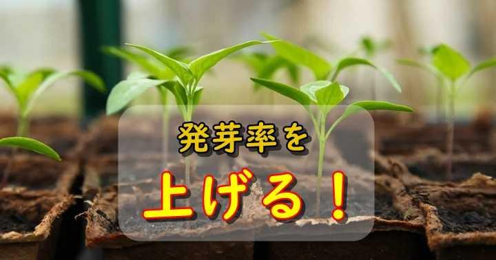 野菜・花の種の発芽率の上げ方