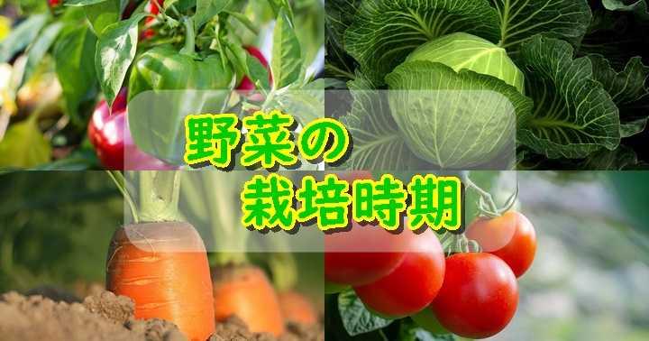 家庭菜園 野菜 一覧
