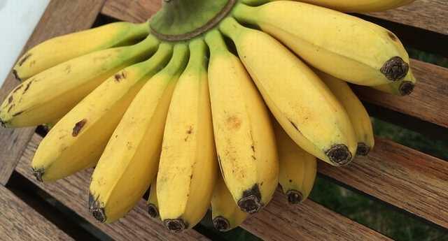 ミニバナナ モンキーバナナ